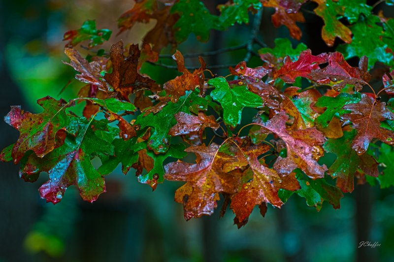fall_spanish_oak_hdr_fr